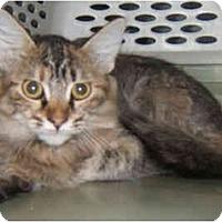 Adopt A Pet :: Torbles - Dallas, TX