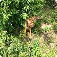 Adopt A Pet :: Gus - Kendall, NY