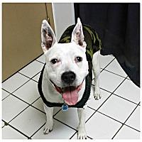 Adopt A Pet :: Sasha - Forked River, NJ