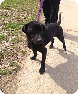 Labrador Retriever Mix Dog for adoption in Baton Rouge, Louisiana - Babee