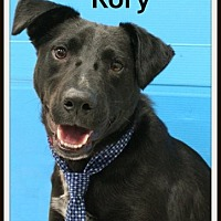 Adopt A Pet :: Rory - Houston, TX