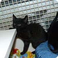 Adopt A Pet :: Farley - Stafford, VA