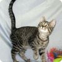 Adopt A Pet :: Karloff - Powell, OH