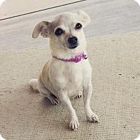 Adopt A Pet :: Missy - Rancho Cucamonga, CA
