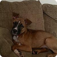 Adopt A Pet :: Lillie - Willingboro, NJ