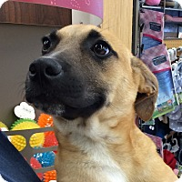 Adopt A Pet :: Wiley - Barton Pup#3 - Olive Branch, MS