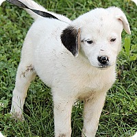 Adopt A Pet :: Mallory - Spring Valley, NY