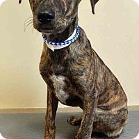 Adopt A Pet :: Ingrid - Oswego, IL