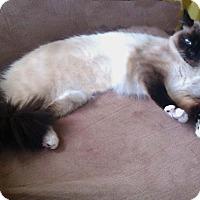 Adopt A Pet :: Bubba - Kansas City, MO