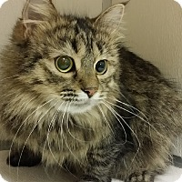 Adopt A Pet :: Katniss - Cannelton, IN