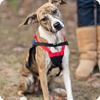 Adopt A Pet :: Cassie - Washington, DC