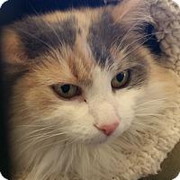 Adopt A Pet :: Tiara - Alpharetta, GA