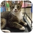 Photo 2 - Domestic Shorthair Cat for adoption in Orlando, Florida - Hope