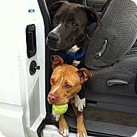 Adopt A Pet :: Nala - La Habra, CA