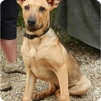 Adopt A Pet :: Angel ADOPTED!! - Antioch, IL