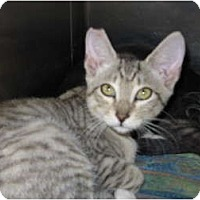 Adopt A Pet :: Andy - Modesto, CA