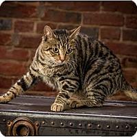 Adopt A Pet :: Nala - Owensboro, KY