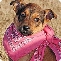 Adopt A Pet :: Nina - Gonzales, TX