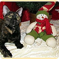 Adopt A Pet :: Anya - Orlando, FL