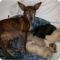 Adopt A Pet :: Bambi and Family - Orlando, FL