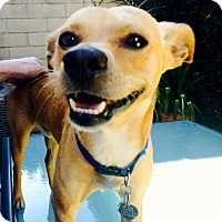 Adopt A Pet :: Cid - Bellflower, CA