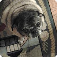 Adopt A Pet :: Mr B - Irmo, SC