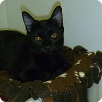 Adopt A Pet :: Ceaser - Hamburg, NY