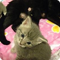 Adopt A Pet :: Ezekiel - Bentonville, AR