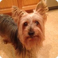 Adopt A Pet :: Max - North Port, FL