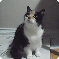 Adopt A Pet :: Eva - *URGENT* - Richmond Hill, ON