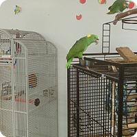 Adopt A Pet :: Romano - Villa Park, IL