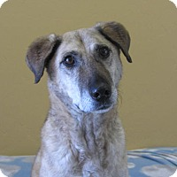 Adopt A Pet :: Dolly - Ridgway, CO