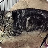 Adopt A Pet :: Vista - Forest Hills, NY