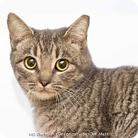 Adopt A Pet :: Muffy - Fountain Hills, AZ