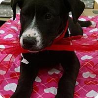 Adopt A Pet :: Lucy - Glendale, AZ