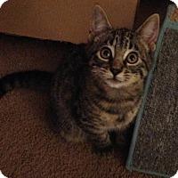 Adopt A Pet :: Mariah - Gainesville, FL