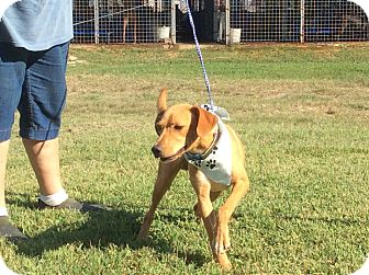Labrador Retriever Mix Dog for adoption in Hagerstown, Maryland - Jax