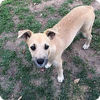 Adopt A Pet :: Skippy - Fresno, CA