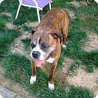 Adopt A Pet :: Shoshawnee - Burnham, PA
