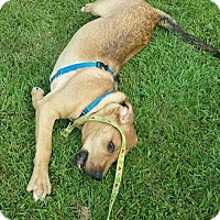 Adopt A Pet :: Zeke - Carpentersville, IL