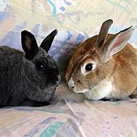 Adopt A Pet :: Bennie - Tustin, CA