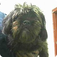 Adopt A Pet :: AMELIA - Atlanta, GA