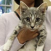 Adopt A Pet :: Doug - Washington, DC