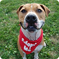 Adopt A Pet :: Titan - Wilmington, DE