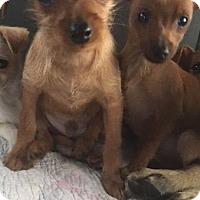 Adopt A Pet :: milo and mason - MIAMI, FL