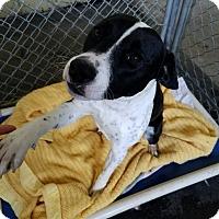 Adopt A Pet :: BO - Gustine, CA