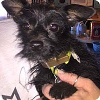 Adopt A Pet :: Spike - Weatherford, TX