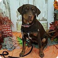 Adopt A Pet :: Mardi - Abilene, TX