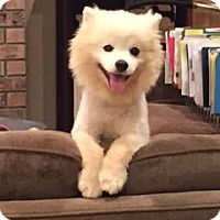 Adopt A Pet :: Beau of Tracy, California - San Diego, CA