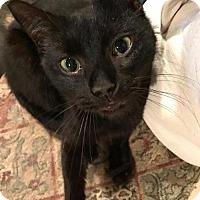 Adopt A Pet :: Margaret - Philadelphia, PA